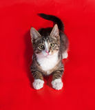 Striped with white kitten lying on red Royalty Free Stock Images