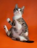 Striped with white kitten playing on orange Royalty Free Stock Photos