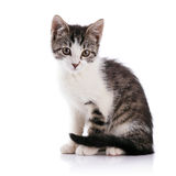Striped with white a kitten. Stock Photos