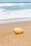 Striped White and Orange Clam Shell on Australian Beach Sand Stock Photos