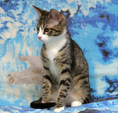 Striped white young cat Stock Photography