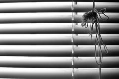 Striped window shuttering in light and shadow lines horizontal. In Black and white monochrome photo for verb design and web processing Royalty Free Stock Image