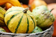 Free Striped Yellow Pumpkin Basket. Halloween Thanksgiving Day Background. Organic Vegetables Harvest Still Life. Selective Stock Photo - 99895510