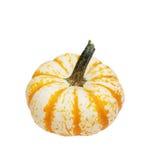 Striped Yellow White Gourd stock photo
