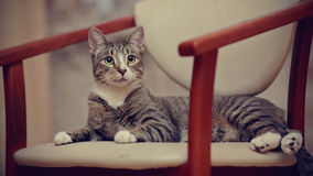 The striped young cat on a chair. stock photos