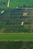 Stripes. Vinefields on the south od Germany Stock Images
