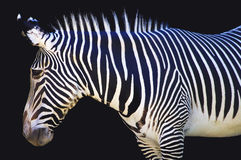 Stripes Royalty Free Stock Images