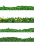 Stripes green grass background Stock Images