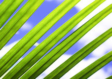 Stripes of Nature - Palm Fronds  Stock Images
