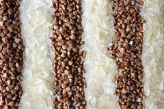 Stripes of rice and buckwheat Stock Photos
