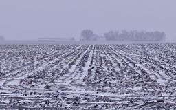 Blizzard Plowed Field. Stripes from a snowy plowed field show hazily through the afternoon blizzard Stock Images