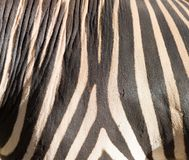 Stripes zebra like background Royalty Free Stock Photo