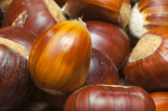 Stripey chestnut autumn fruit. Macro shot of sweet chestnuts ready for roasting on the fire royalty free stock image