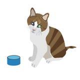 Stripey głodny kot Fotografia Stock