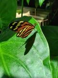 Stripey oranje vlinder stock fotografie