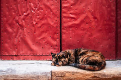 Stripped cat, sleep, studded red door, stone floor Royalty Free Stock Images