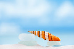 Stripped clown sea shell with ocean , beach and seascape Royalty Free Stock Image