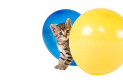 Stripped kitten and ballonns Royalty Free Stock Images