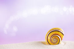 Stripped  sea shell on white sand with festive glitter background Stock Image