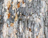 Stripped tree bark 2 Stock Image