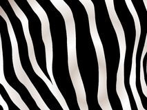 Stripped zebra background Stock Photo