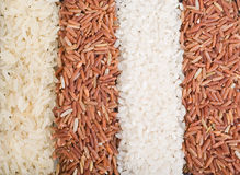 Strips from different rice varieties Stock Images