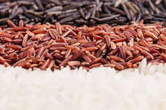 Strips of red, black and white rice close-up. Rice texture background. Macro Royalty Free Stock Images
