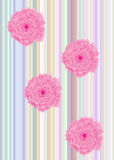 Strips with roses Royalty Free Stock Photography