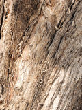Stripy and rough Paper Bark Gum tree bark Royalty Free Stock Photos