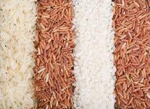 Strisce dalle varietà differenti del riso Immagini Stock