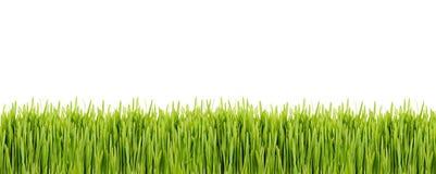 Striscia di erba verde su fondo bianco Fotografia Stock Libera da Diritti