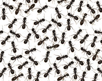 Strisciando con le formiche Fotografia Stock Libera da Diritti