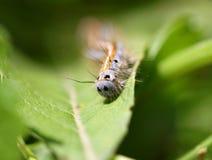 Strisciare di Caterpillar Fotografie Stock Libere da Diritti
