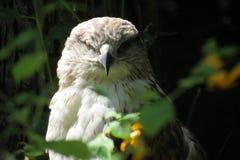 Strizzatina d'occhio dell'uccello Immagini Stock