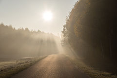 Stråle av solljus som ändå kommer träd på den tomma vägen Fotografering för Bildbyråer