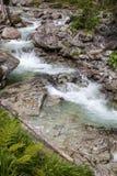 Strömen Sie Studeny-potok in hohem Tatras, Slowakei Stockfotos
