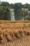 Stro in padieveldvoorzijde van de waterval van Verbodsgioc in Vietnam Stock Afbeelding