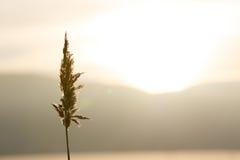 Stroh bei Sonnenuntergang Lizenzfreies Stockbild