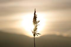 Stroh bei Sonnenuntergang Lizenzfreie Stockfotografie