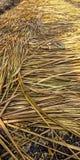 Stroh, das Reis bedeckt lizenzfreie stockfotografie