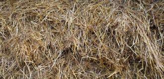 Stroh des Getreides. Stockfoto
