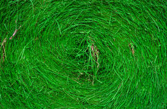 Stroh grünes backgroundwere gemalt Lizenzfreies Stockfoto