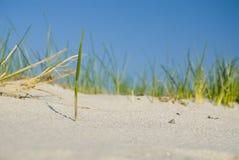 Stroh im Sand Stockfotos