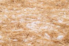 Stroh mit Schnee Stockbild