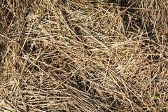 Stroh, trockener Strohbeschaffenheitshintergrund, Weinleseart f?r Design lizenzfreie stockfotos