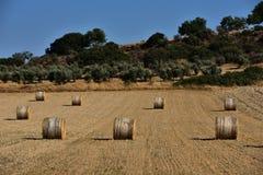 Strohballen auf Ackerland mit blauem Himmel Stockfotografie