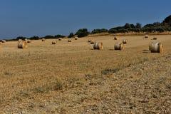Strohballen auf Ackerland mit blauem Himmel Stockbilder