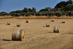Strohballen auf Ackerland mit blauem Himmel Stockfotos