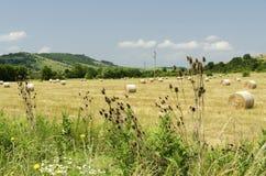 Strohballen auf einem Gebiet während der Sommerernte und eines Storchs Stockbild