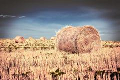 Strohballen nach Ernte auf dem Gebiet lizenzfreies stockbild